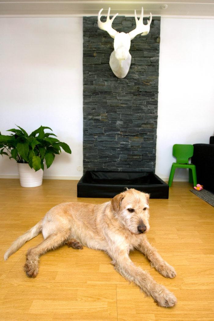 Arthur har snabbt gjort sig hemmastadd hos familjen i Örnsköldsvik. Och lugn som en filbunke är han!