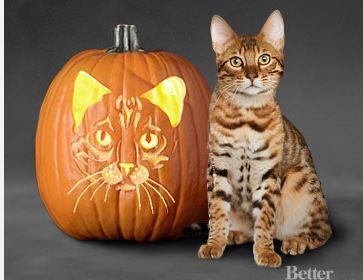 Cat-face-jack-o-lantern-image