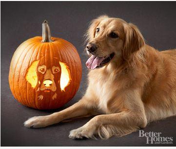 dog-face-jack-o-lantern-image