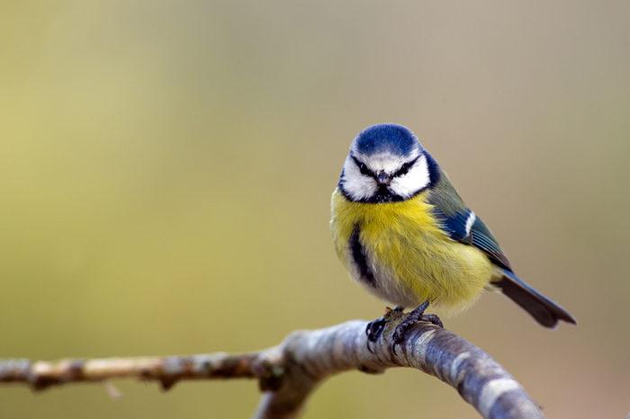 mat till småfåglar