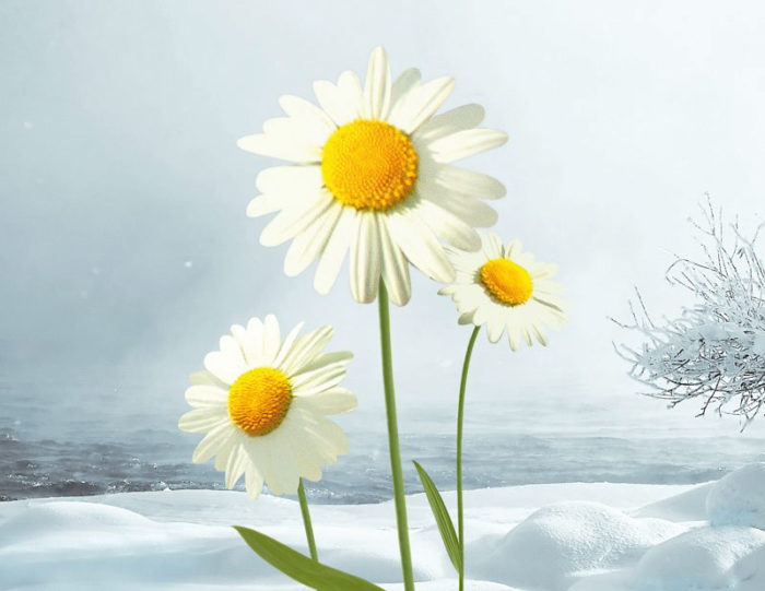 Vinter_i_p1