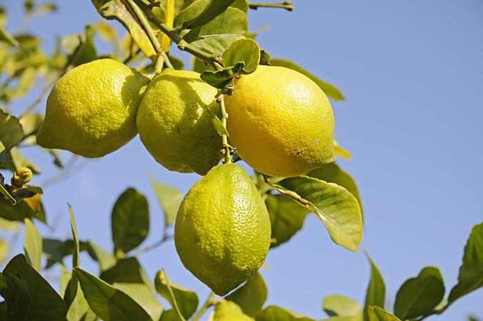 gör rent skärbrädan med citron