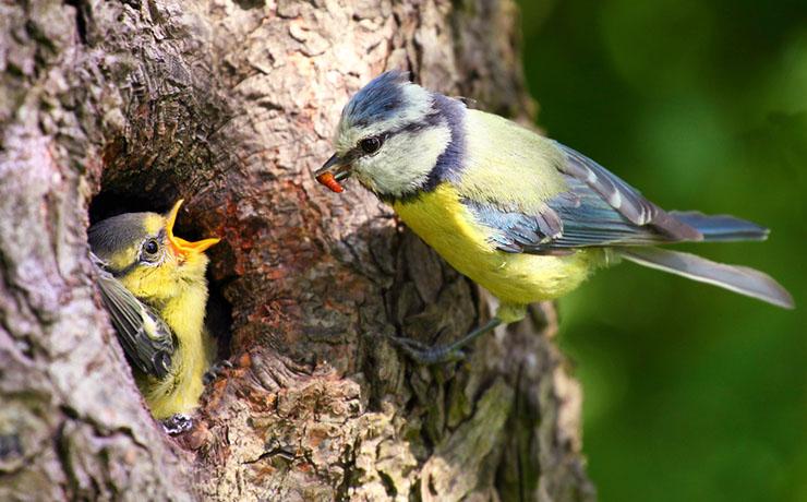 Gör din egen fågelmat