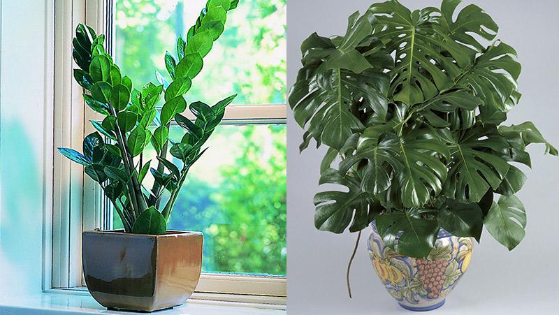 inneväxter som tål sol