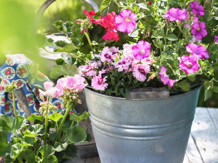 Plantera sommarblommor i kruka