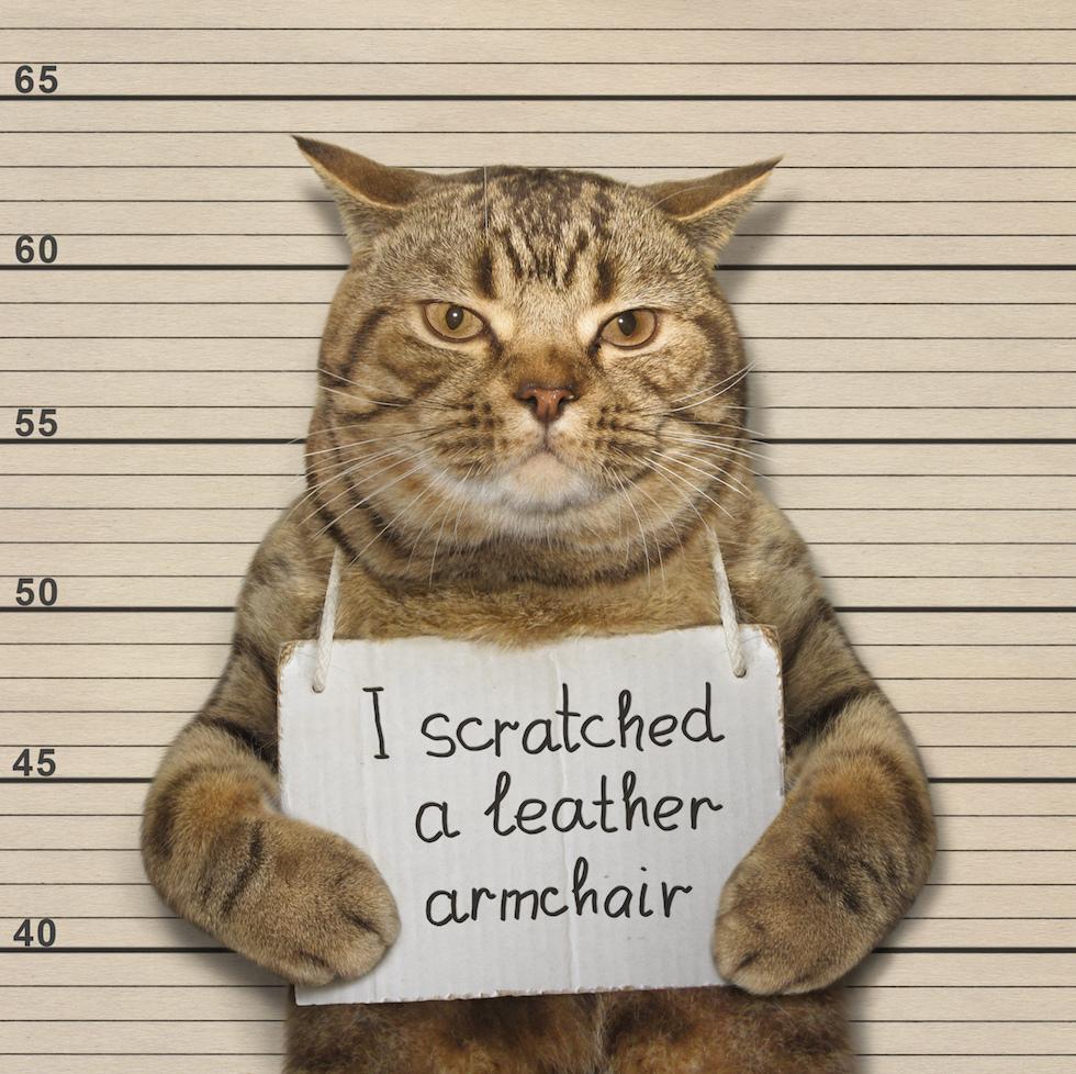 varför klöser katter