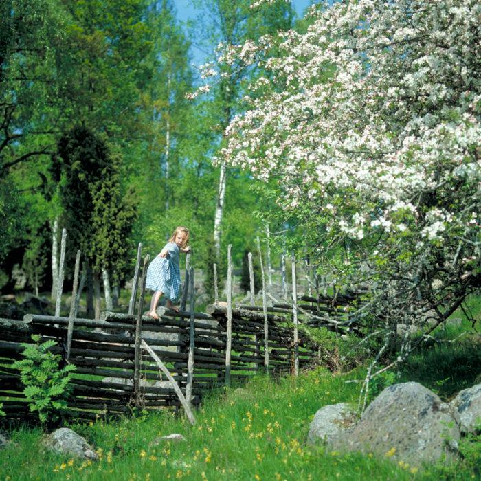 Flicka i klänning klättrar på gärdsgård vid blommande fruktträd.